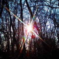 diamonds into the woods. #diamonds #woods #rainbow #light #sun #sunshine #trees #shadows #nofilter #summerair #winter