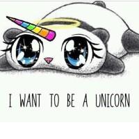 #Unicorn #unipanda #panda #Einhorn #Rainbow #Regenbogen