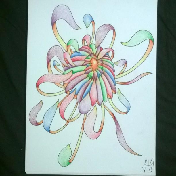 Chrysantheme Arcenciel Rainbow Chrysanthemums Multicolor Fleur