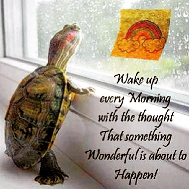 Awwwthis Is So Nice Have A Wonderful Day Louisehay