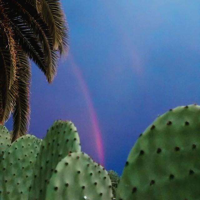 #tucson #az #arizona #sonoran #desert #monsoon #rainbow #arcoiris #cactus #cactusgarden #cactusgram #nopal #nopales #southernarizona #southwest #clouds #gardensofinstagram #garden #jardin #rain #lluvia #igsouthwest #instagramaz #sky #skyporn #cielo #clouds #cloudporn #palmtree #filter #nature