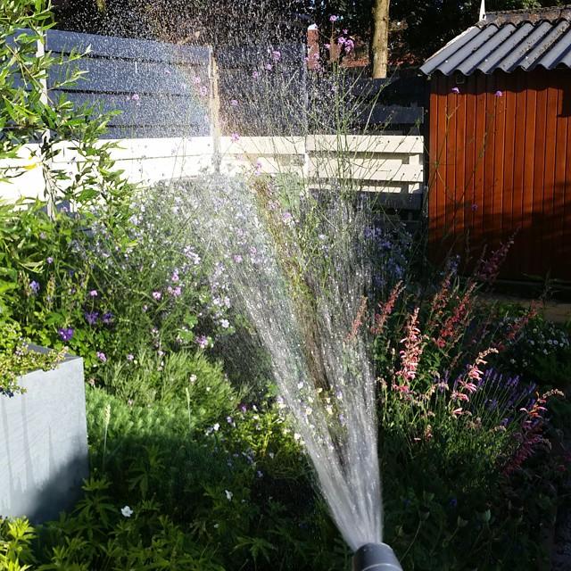 #garden #sproeien #tuin #water #straal #watering #gardening #plants #planten #flowers #bloemen #regenboog #rainbow